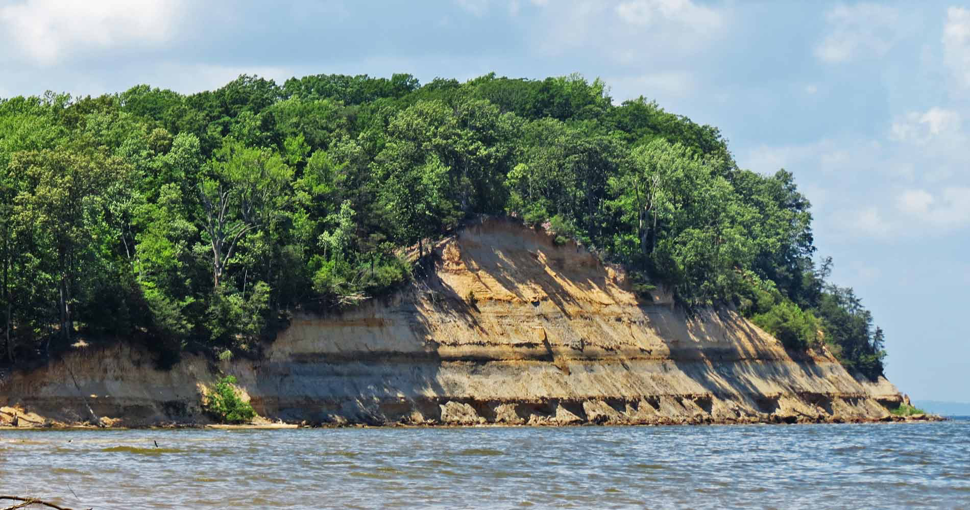 Calvert Cliffs State Park on the western side of Chesapeake Bay is a treasure trove of fossils. (Courtesy YourChesapeake.com)