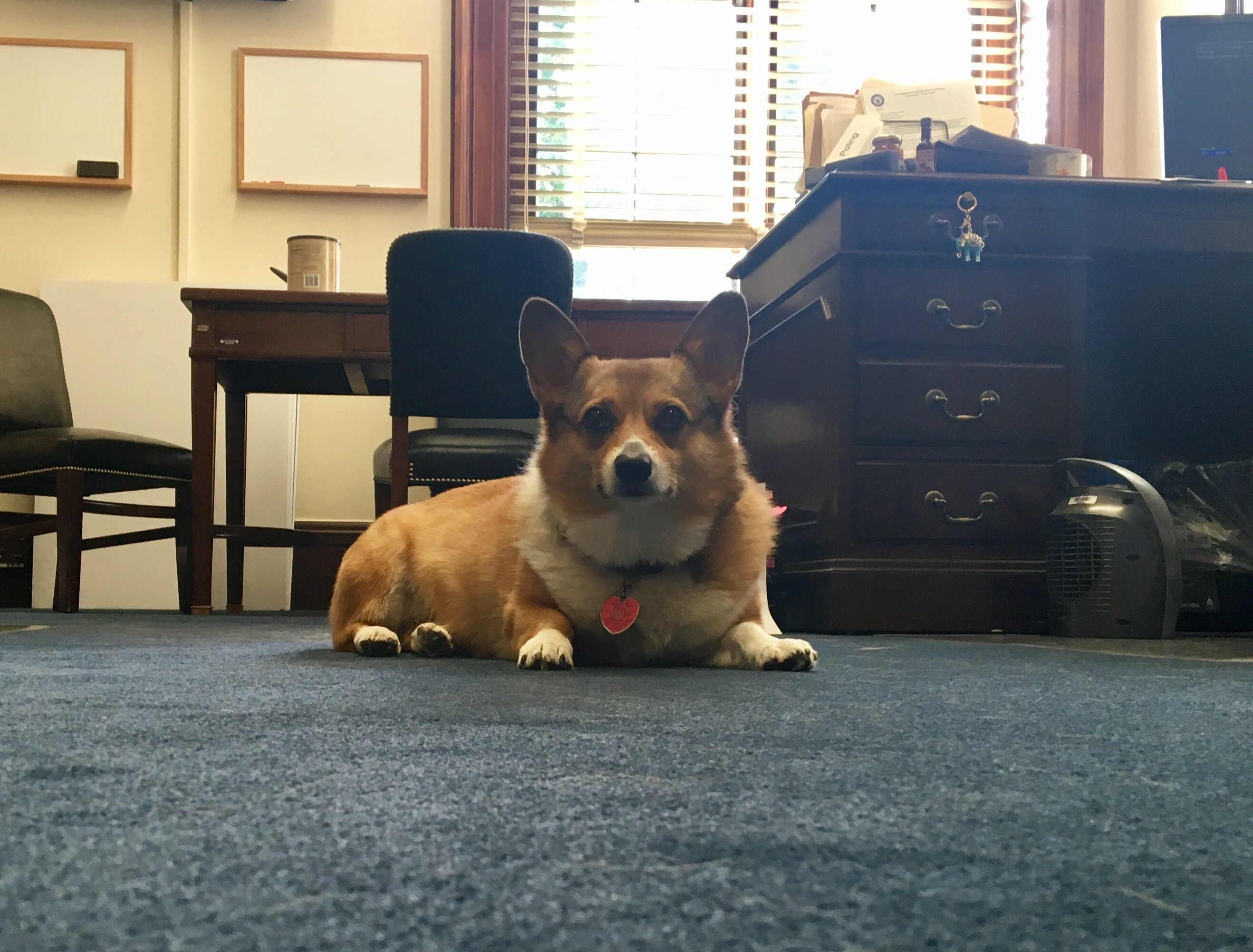 Rigby monitoring for fallen crumbs at lunch. (Courtesy of Perdue's office)