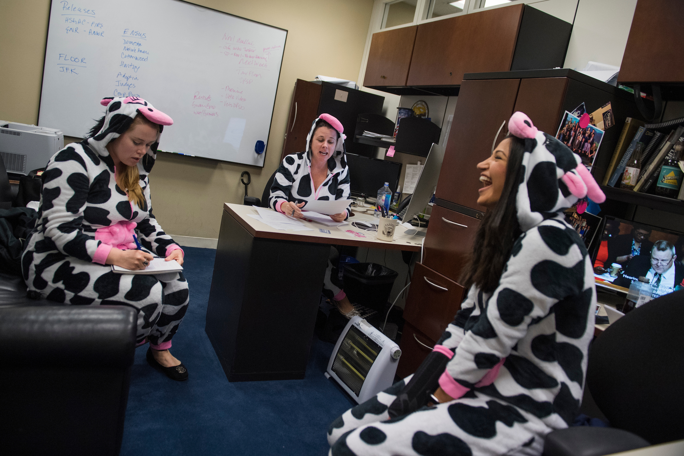 UNITED STATES - OCTOBER 31: Aides for Sen. Steve Daines, R-Mont., from left, Lindsay Black, Marcie Kinzel, and Katie Waldman, are seen in their Halloween costumes in Hart Building on October 31, 2017. The three represent the 3 cows to 1 person population in Montana. (Photo By Tom Williams/CQ Roll Call)
