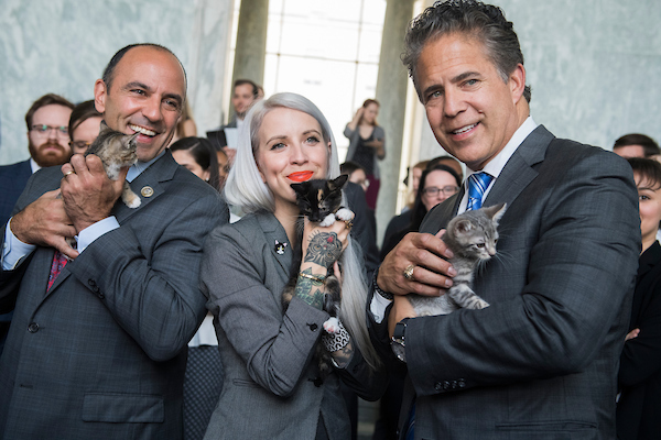 "UNITED STATES - JUNE 7: Reps. Jimmy Panetta, D-Calif., left, Mike Bishop, R-Mich., and Hannah Shaw, an animal advocate known as ""Kitten Lady,"" pose during a event in Rayburn Building on bipartisan legislation to end the Department of Agriculture's scientific testing on kittens on June 7, 2018. (Photo By Tom Williams/CQ Roll Call)"