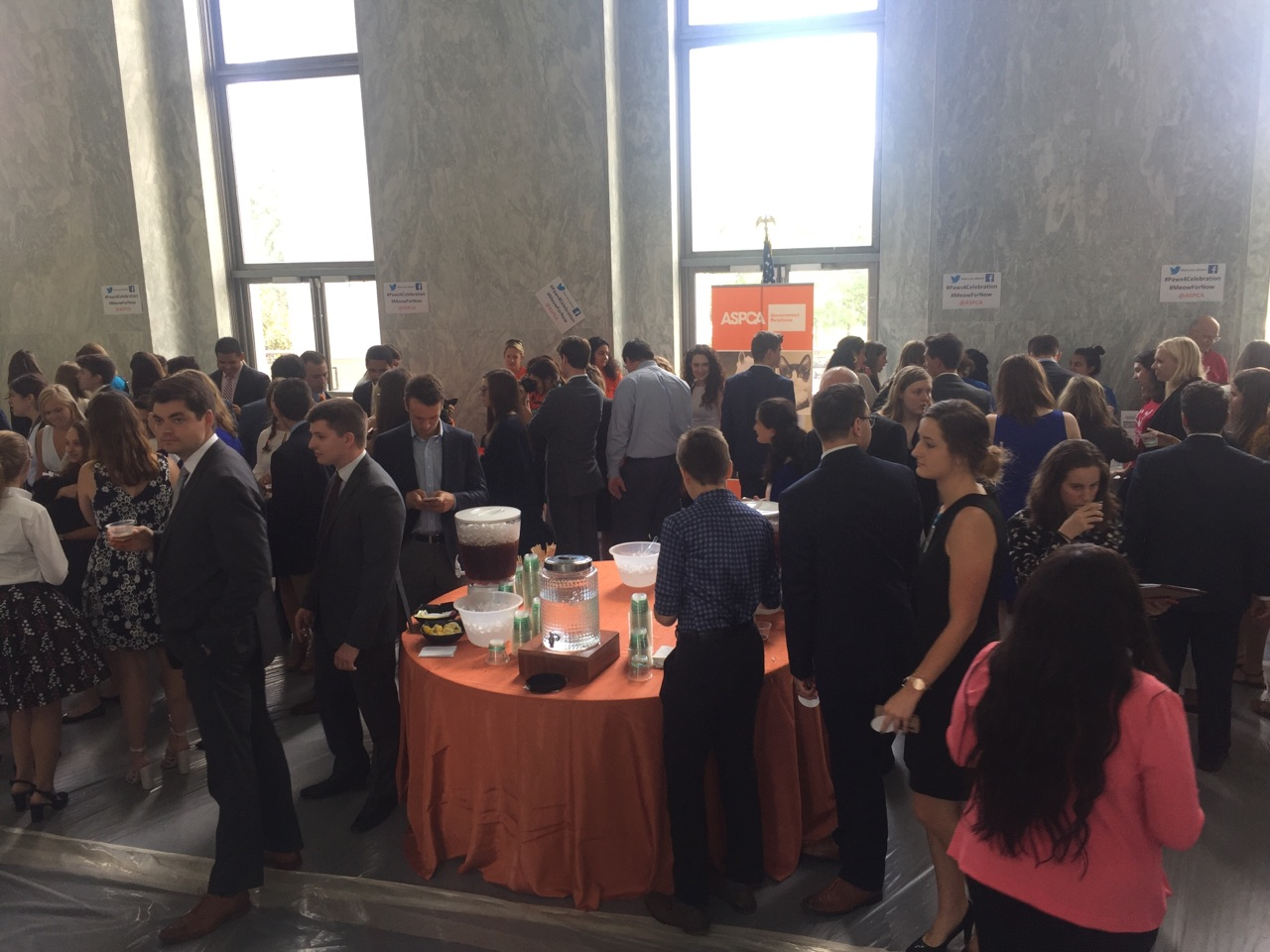 The table of ice tea got pretty crowded at ASPCA's event. (Alex Gangitano/ CQ Roll Call)