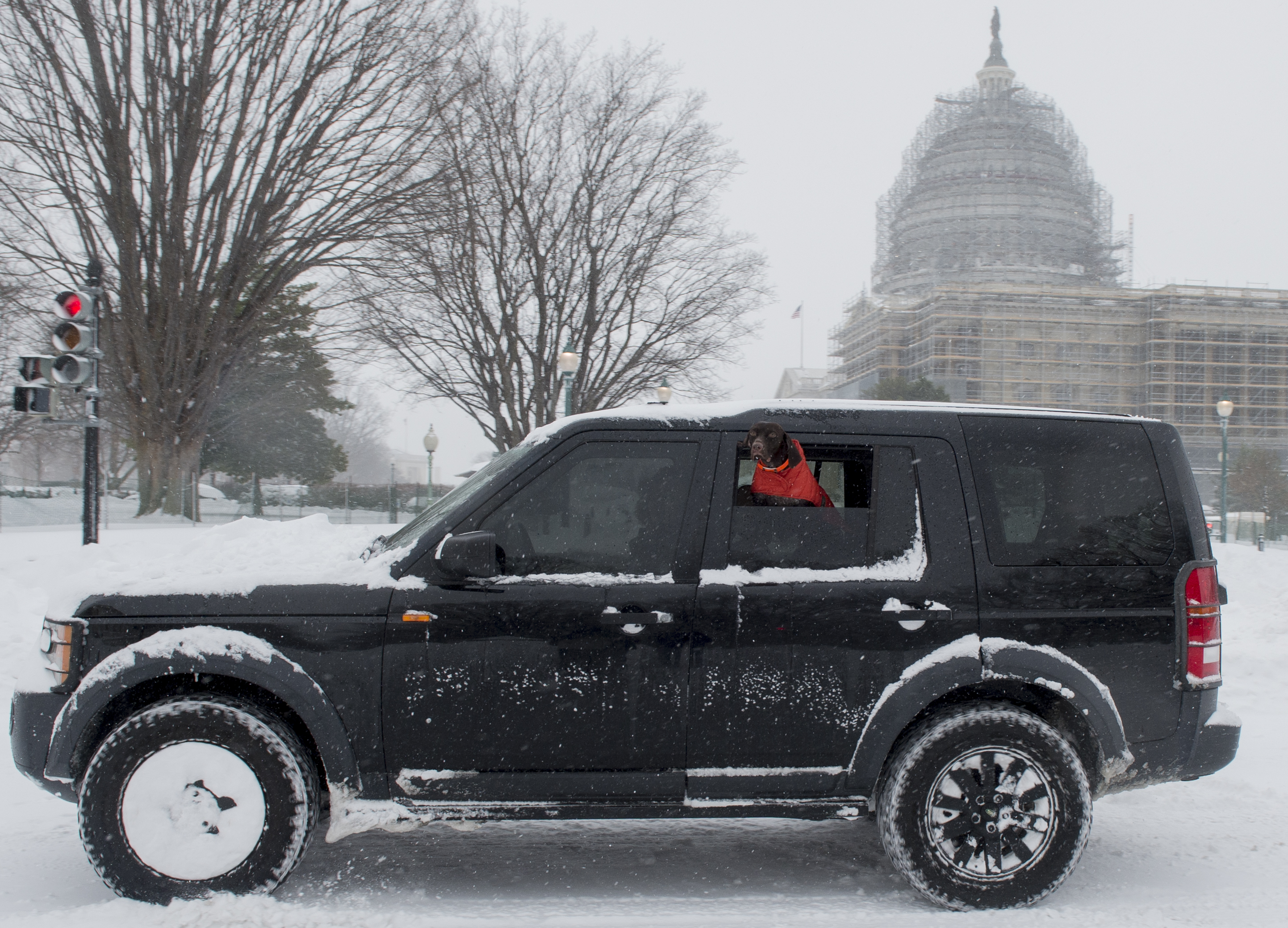 UNITED STATES - JANUARY 23: A dog takes in the sights of a snow covered Capitol campus while riding by in an SUV along Constitution Ave past the U.S. Capitol on Saturday morning, Jan. 223, 2016. (Photo By Bill Clark/CQ Roll Call)